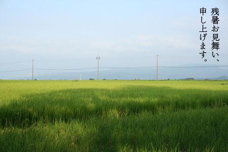 20070815.jpg